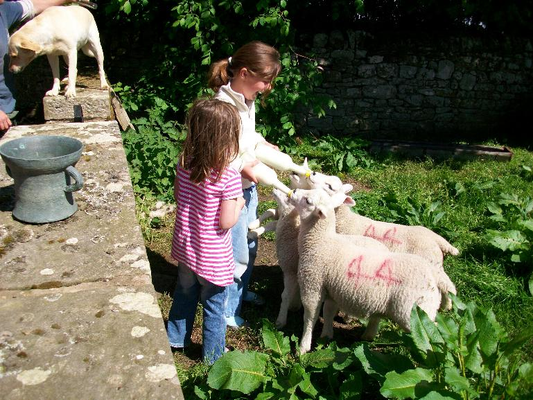 feeding the pet lambs at Cornhills farm