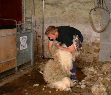 Northumberlandfarmhouse SHEARING